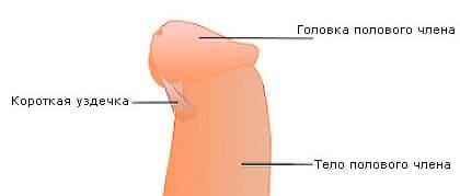 половые позиции при небольшом пенисе