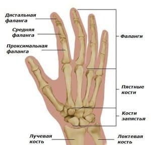 Перелом пальца руки - Причины, симптомы и лечение. МЖ.