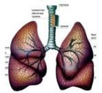 Атопическая (аллергическая) бронхиальная астма