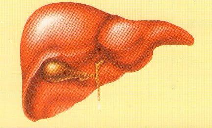 Токсический гепатит продолжительность лечения