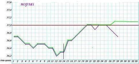 График базальной температуры (БТ) в норме и при беременности